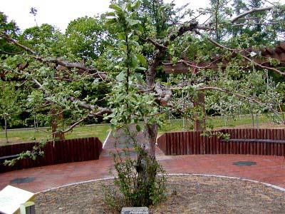 ニュートン の 林檎